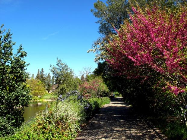 Spring in Davis